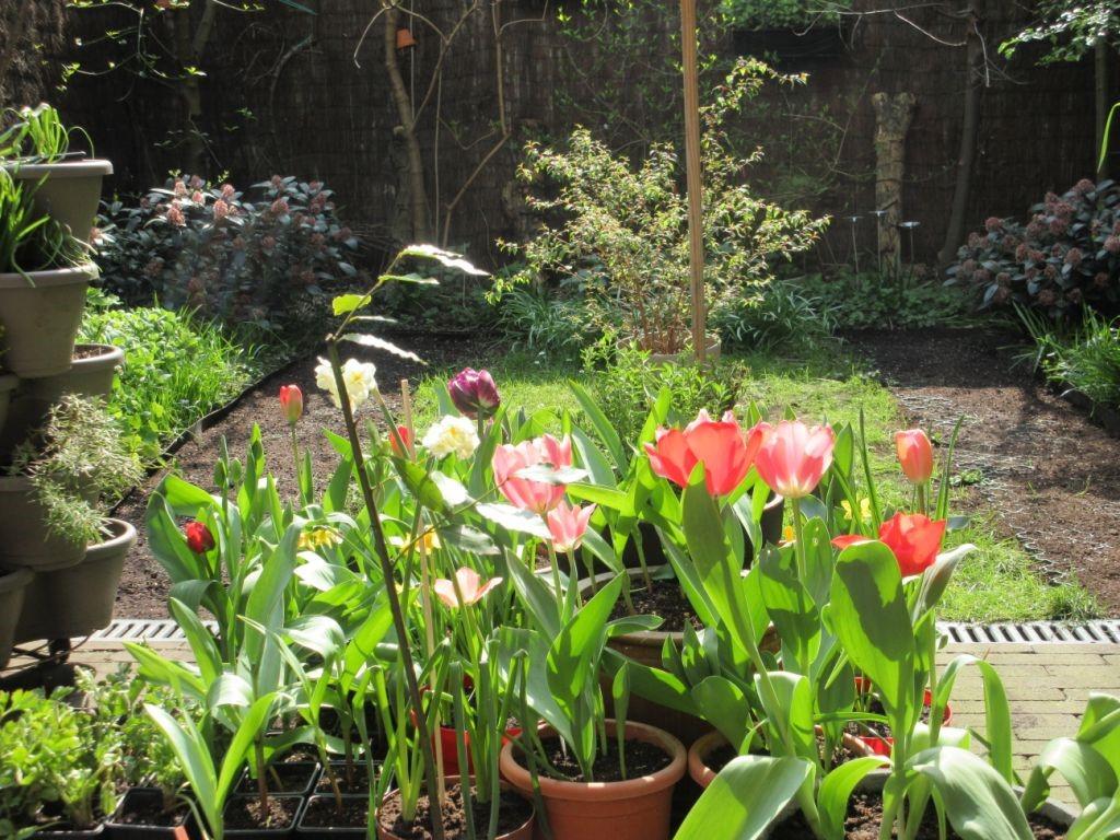 Belinda Bruzzese, foto van haar tuin, FelixArchief, inv.nr 2884#1.